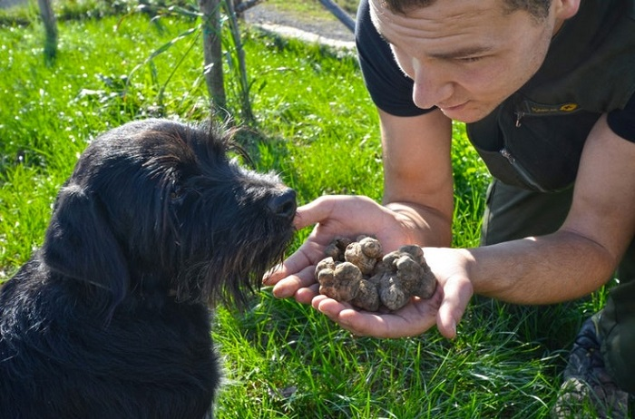 Incredible learning holidays-1, istrian truffle hunting