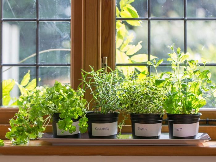 several pots with different kind of herbs place them by a window