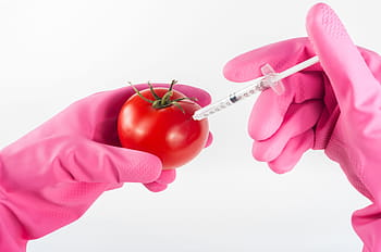 Genetically Modified Organism foods (GMO)